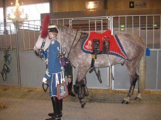 heste show herning